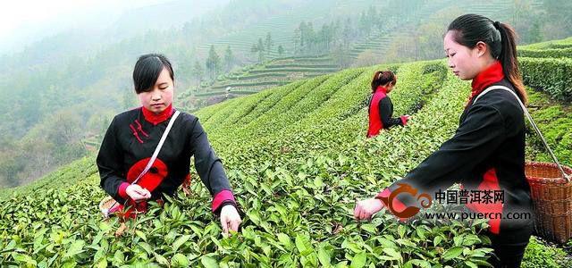 关于武当道茶的故事传说
