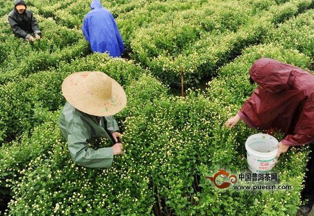 普洱茶网,www.puercn.com