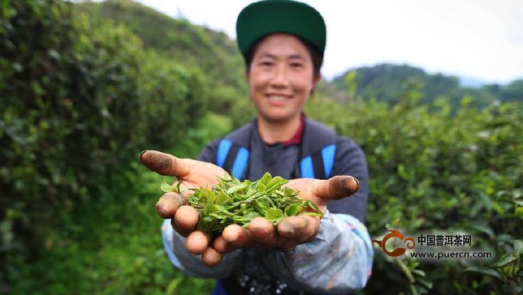 石阡苔茶产地环境-正山小种