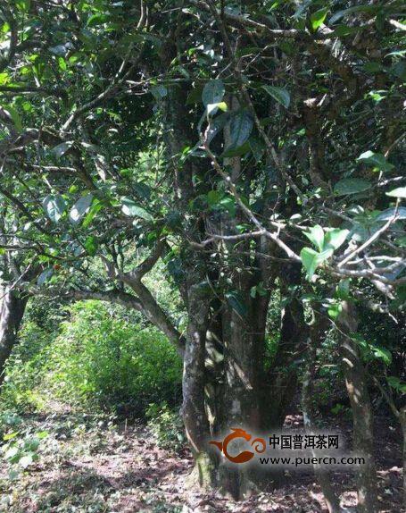 """现代农业""""魅力古茶园"""",""""和平茶园""""被评为云南省高原特色现代农业""""秀美"""