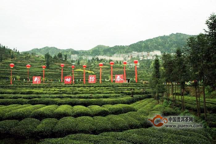 邓村绿茶价格