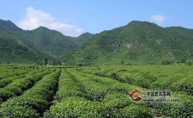 产自皖南山区的宣城市宣州区溪口镇,产地分布于黄山余脉的吕辉村塔泉