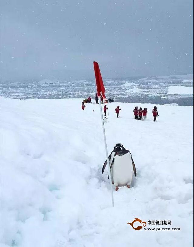 极致易道,南极贺岁