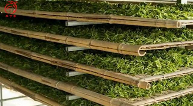 【凤宁茶学堂】第九课:红茶工艺解析