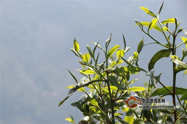 普洱茶文化的内涵及价值意义新探