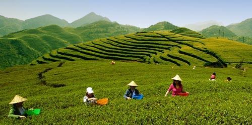 新形势新机遇 宁德茶人共谋茶产业发展