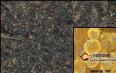 黑茶金花,真的贵如黄金?