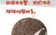 如何从外观细节,挑出一块好的普洱茶饼茶来?