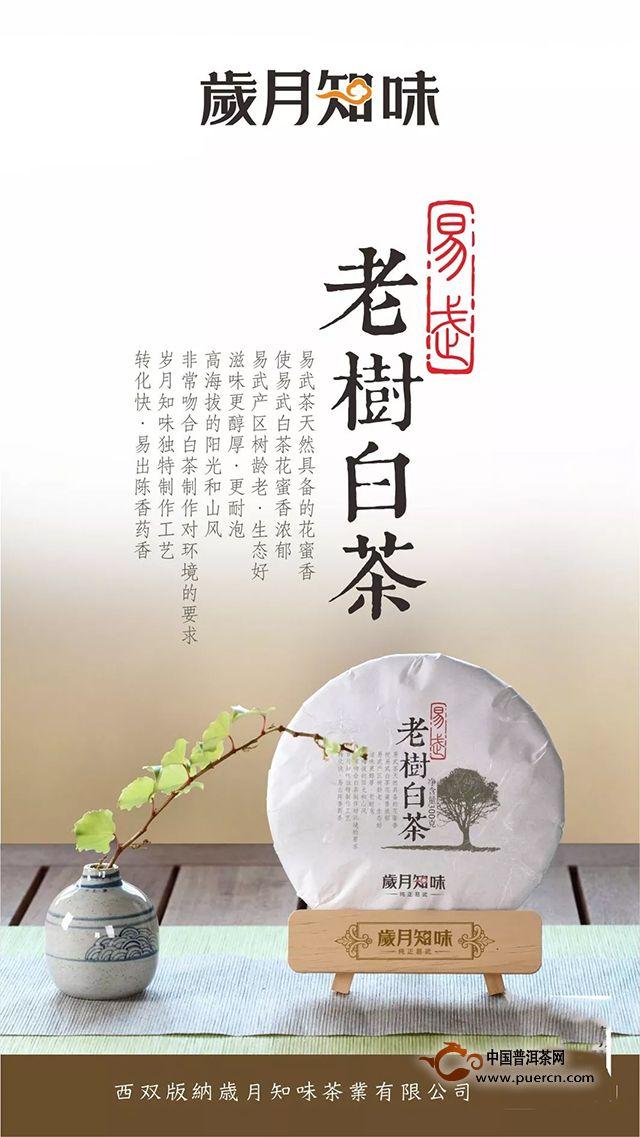 【新品】老树白茶|易武白茶开山之作