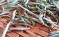 白茶能降血糖,有何科学依据?