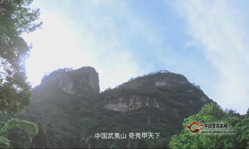 【视频】武夷岩茶制作工艺过程纪录片