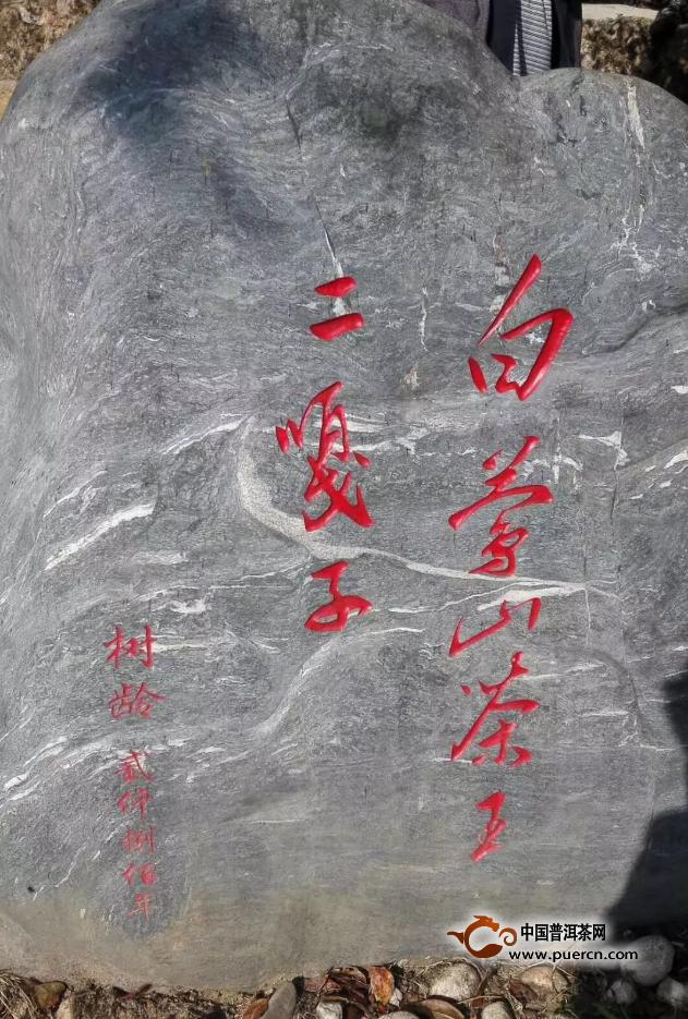 2019年白莺山普洱古树茶价格