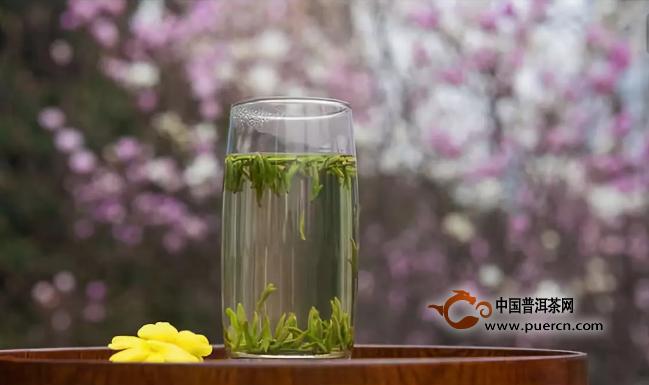 白茶春茶采制的时间和采摘标准