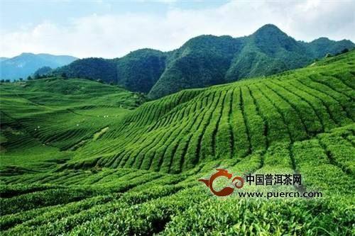 遵义市茶产业简介