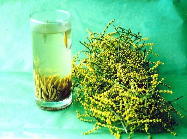 珠兰花茶的饮用禁忌有哪些