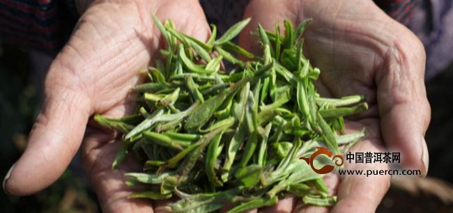 春白茶为什么备受青睐?