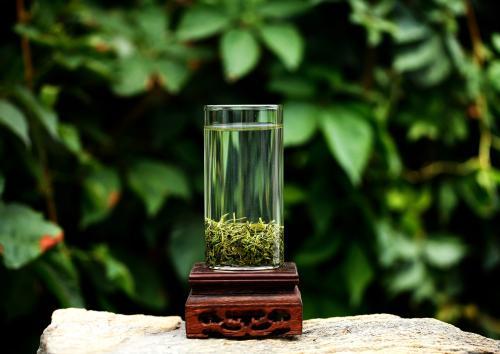 崂山绿茶的起源