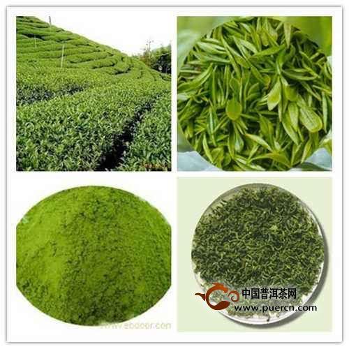 绿茶提取物可提高大脑的认知功能