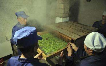 什么是炒青绿茶、烘青绿茶、晒青绿茶、蒸青绿茶?