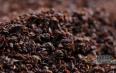 如何鉴别红碎茶的好坏?