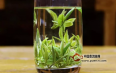 茶叶品质是由品种决定的,还是环境决定的?