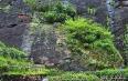 武夷岩茶的五大系列解读