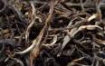 普洱茶制作:头天杀青的鲜叶,摊晾一晚,隔天早上再揉捻,会影响干茶品质吗?