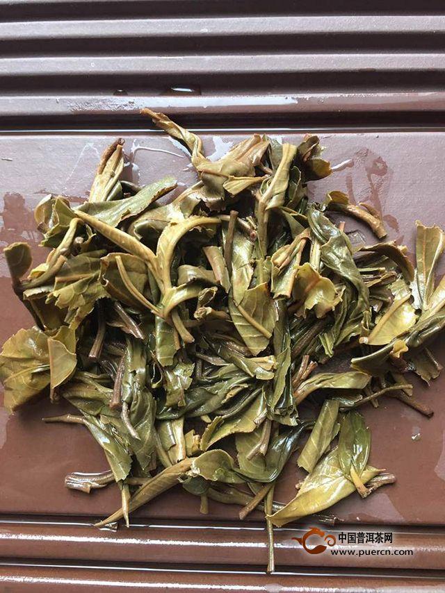 精致茶品|2019年拉佤布傣贺岁冰岛生茶评测报告