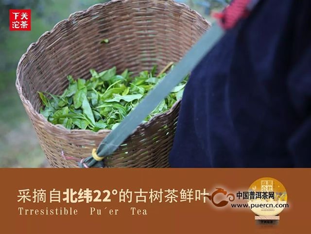 下关沱茶:【麻黑公社】真享易武古树茶核心之味
