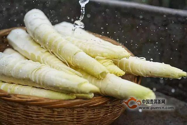 润元昌茶业:为何人人皆爱春茶?越是春季热情越是高涨?