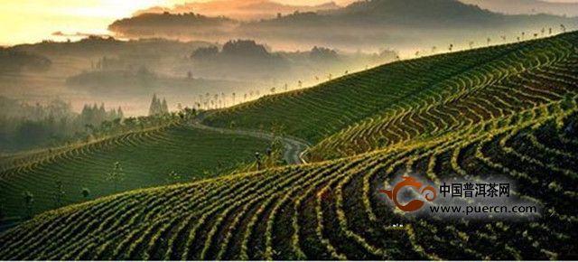 从小茶叶到大茶业 安徽六安探索绿色蝶变路