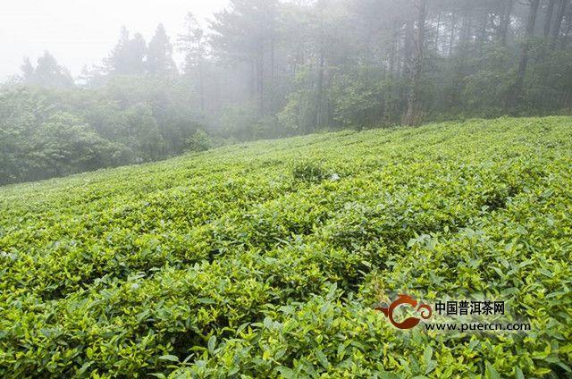 湖红工夫茶是什么茶?产地在哪里?