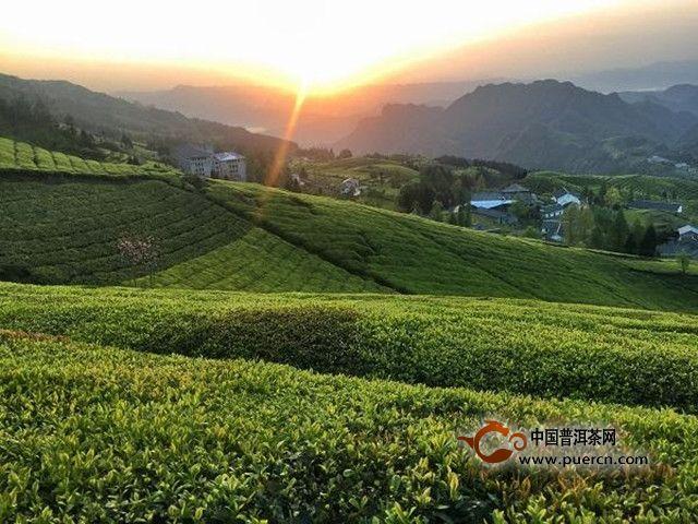 湖红工夫茶历史起源
