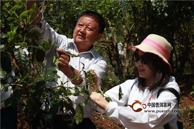 拉佤布傣:这次茶山行,拉佤布傣走了40年