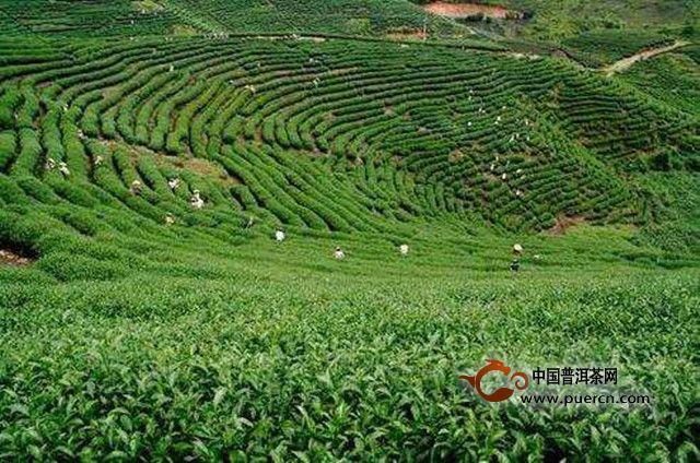 黄山多部门联合行动,营造茶叶市场放心消费环境