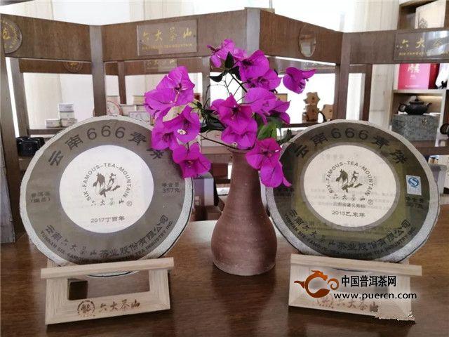 六大茶山【勐海品鉴会】西南有茶国,云海中生辉