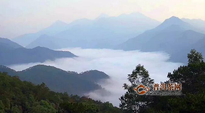 好的山头茶都满足这样自然条件,以大忠山为例!