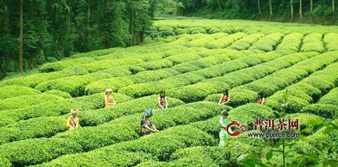 云南滇红茶产自什么地方
