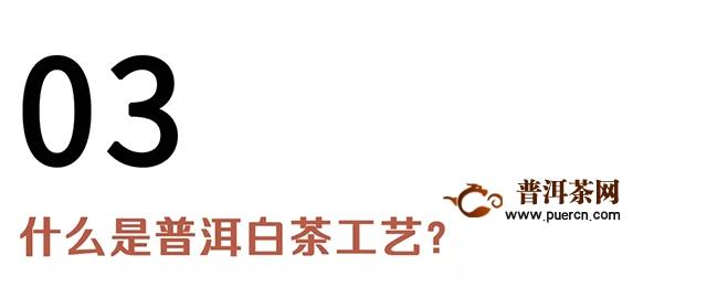 【新品开售】昔去雪如花,今来花似雪——白茶雪白开售!