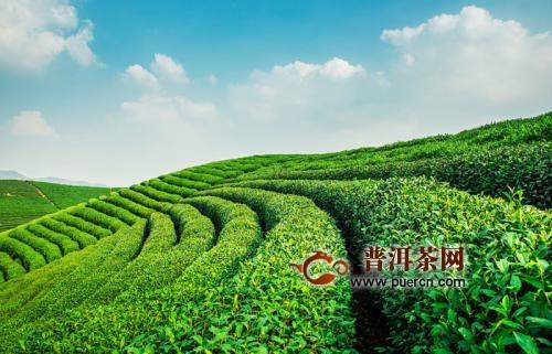 安化百两茶起源历史