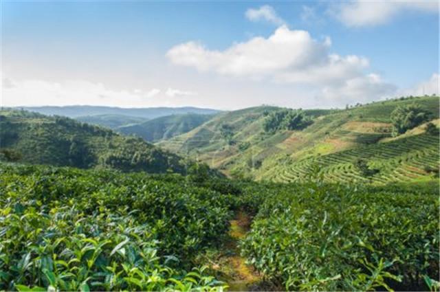 2018年度云南省科学技术杰出贡献奖获得者盛军:十二年专注一片茶叶的成长