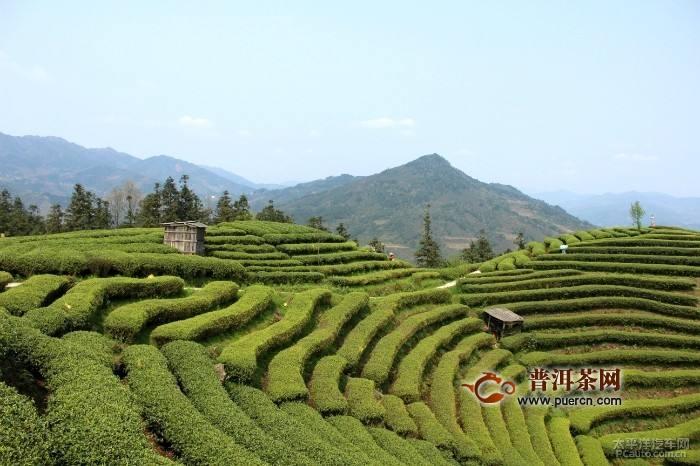 竹叶青茶产地及竹叶青茶制作工艺