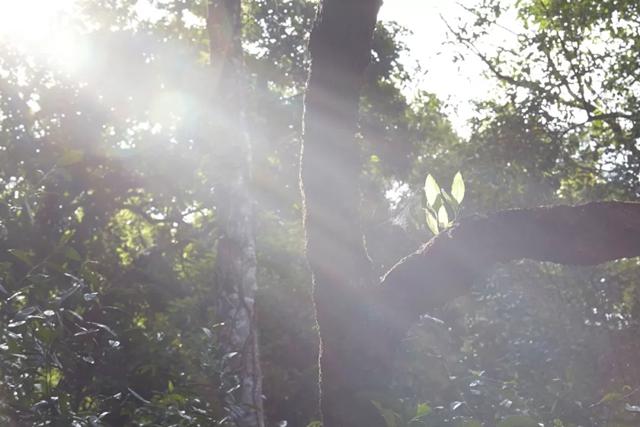 勐宋保塘—寻访古树茶