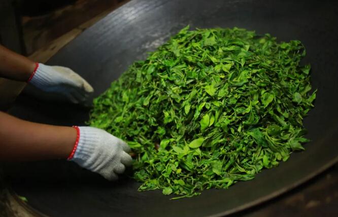 高温杀青把酶杀死了,茶叶还怎么转化?
