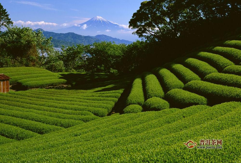 绿茶的味道怎么形容,绿茶味道之鲜爽、浓醇、苦涩