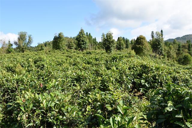 普洱市普洱茶地理标志产品专用标志企业数全省第一