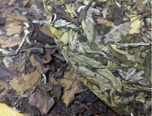 新老白茶的区别在哪里?