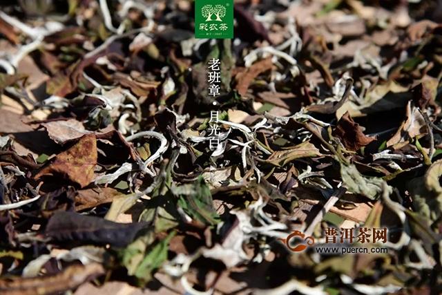 老班章·月光白 彩农茶带给爱茶的您不同的品味