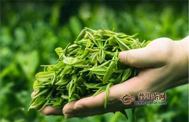 碧螺春是绿茶还是乌龙茶?是绿茶!