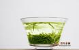 怎样喝绿茶才是正确的,三种方式教您正确喝绿茶!